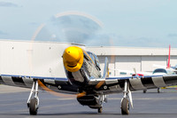 P-51D Mustang, Bald Eagle warming up its engine.
